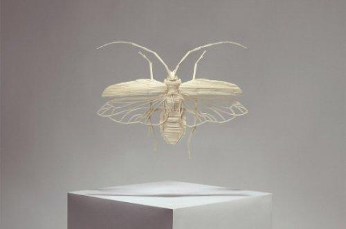 Уникальная коллекция моделей насекомых от Кайла Бина