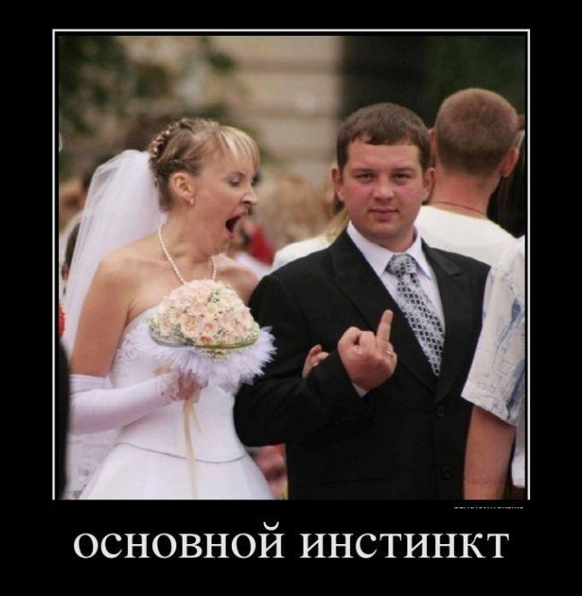 смешные снимки
