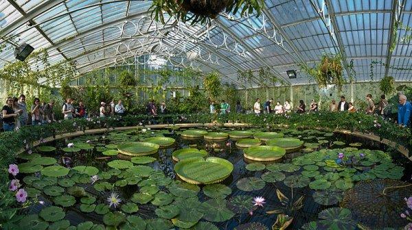 Królewskie Ogrody Botaniczne w Kew, Wielka Brytania