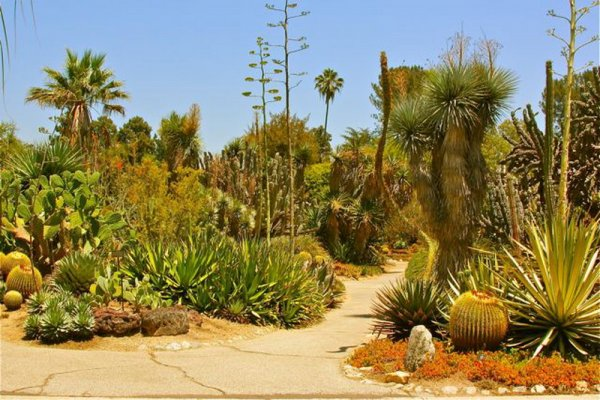 Ogród Huntington Desert Garde), San Marino, Kalifornia, USA