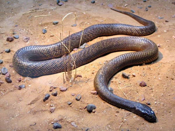 Топ-10 самых ядовитых животных в мире