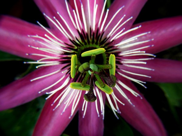 Необычные и удивительные растения (21 фото)