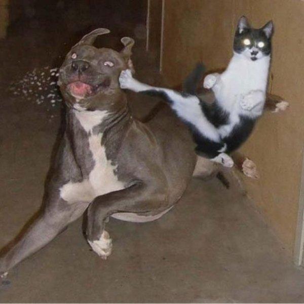 Кошки, постигшие боевое искусство ниндзя (29 фото)