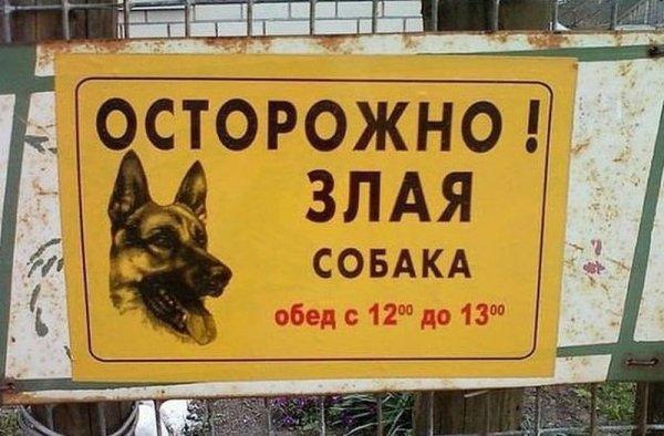 Прикольные таблички-предупреждения о собаках (21 фото)