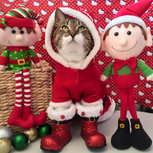 Кошки, которые хотят быть похожими на людей (10 фото)