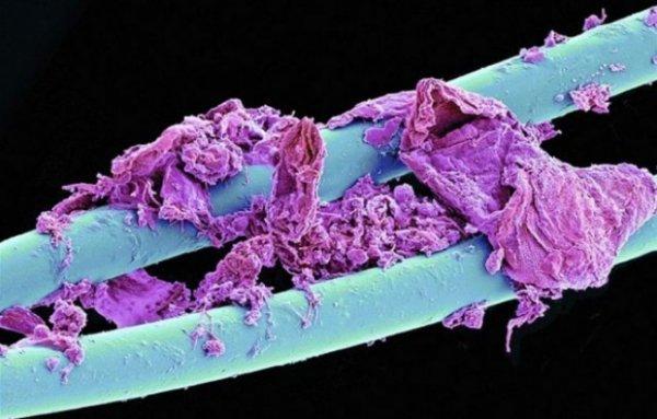 Повседневные вещи под микроскопом (25 фото)