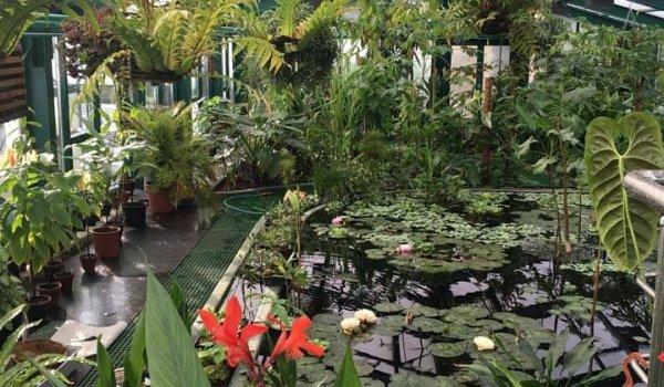 В Москве появится оранжерея с тропическими кувшинками