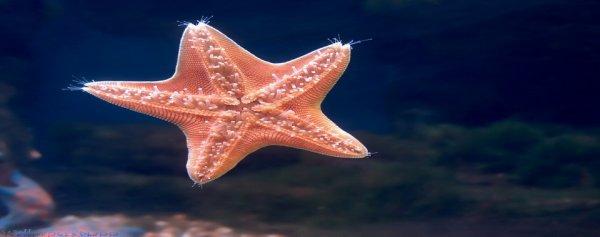 Приморские научные деятели выступили с предложением использовать для изготовления косметических средств морских звёзд